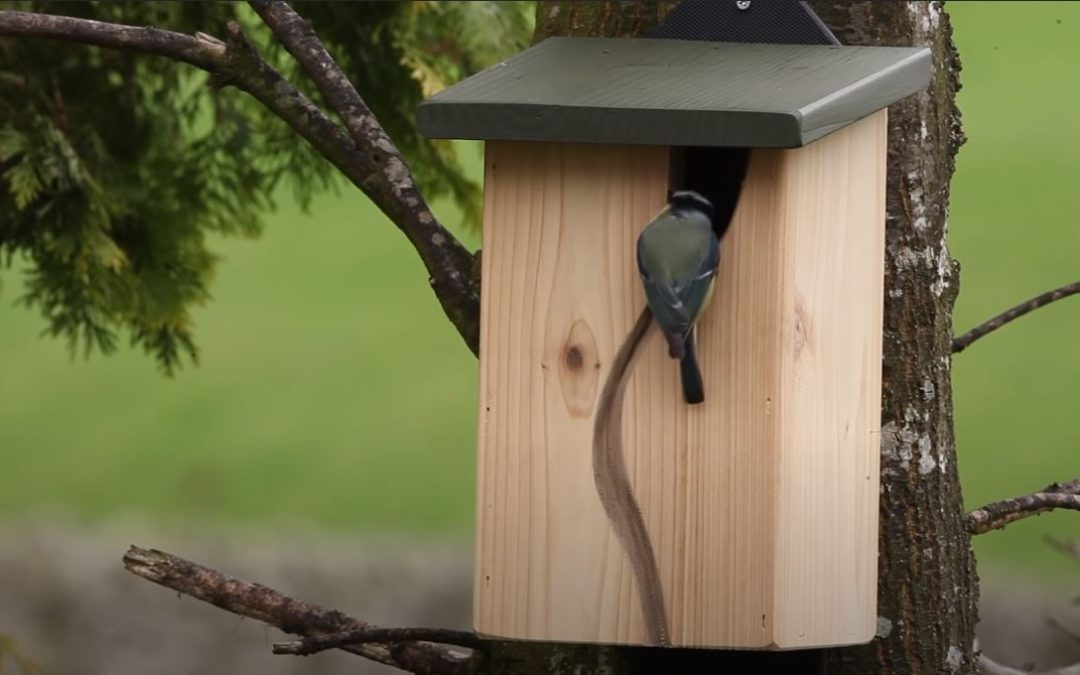 Perfect nest box for blue tit